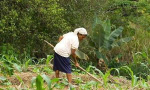 Gabriela Teixeira – Cultura tradicional da agricultura quilombola impactada pelo agronegócio