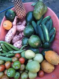 Leandro da Silva – A diversidade da Comida de Verdade
