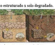 Joyce Lopes Santos de Souza – ALTERNATIVAS ECOLÓGICAS NAS ÁREAS PRODUTIVAS NO ASSENTAMENTO GEORGINA-ES – pdf